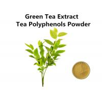 Wholesale High Standard Green Tea Extract 1000mg, Pure Natural Green Tea Extract Fat Loss For Food And Drink from china suppliers
