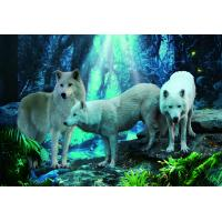 Wholesale Pet / Pvc / PP Wolf Animal Photos Lenticular 3d Posters For Store Eco - Friendly from china suppliers