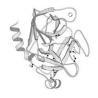 Wholesale Animal origin free trypsin E.coli recombinant Trypsin   3800 u/mg pro from china suppliers