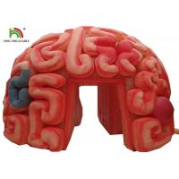 Wholesale Giant 4m  Inflatable Brain Replica Artificial Organs For Educational SGS EN71 from china suppliers