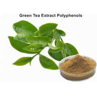 Wholesale Organic Green Tea Extract Weight Loss , Bulk Supplements Green Tea Extract Anti - Cancer from china suppliers