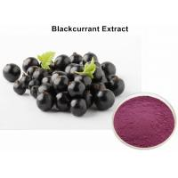 Wholesale Natural Blackcurrant  Anthocyanin Extract Powder UV Improving Immunity Non - GMO from china suppliers