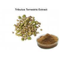 Wholesale Tribulus Terrestris Natural Plant Extracts 40% - 90% Saponins For Cardiotonic from china suppliers