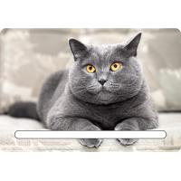 Buy cheap Custom 7x11cm Lovely Cats 3d Fridge Magnets With Notepad For House Refrigerator from wholesalers