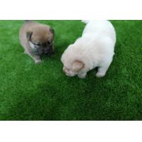 Wholesale High Density Commercial Outdoor Grass Carpet Pet Friendly Anti Bacterial from china suppliers