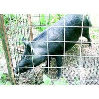 4 Gauge Welded Hog Wire Mesh Panels 16' X 34 Panel For Livestock Fencing