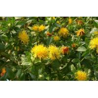 Quality Safflower Natural Plant Extracts 4% Powder Carthamin Preventing Atherosclerosis for sale