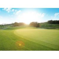 Wholesale Green 50400 Stitches / ㎡ Artificial Golf Turf No Mowing No Fertilizing Lush from china suppliers