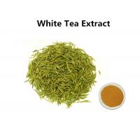 Wholesale White Tea Leaf Extract Treating Measles, 30% Polyphenols White Tea Extract For Skin from china suppliers